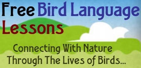Bird Language Lessons