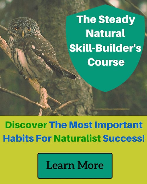 Steady Natural Skill Builders Course